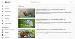 Fascinants Insectes