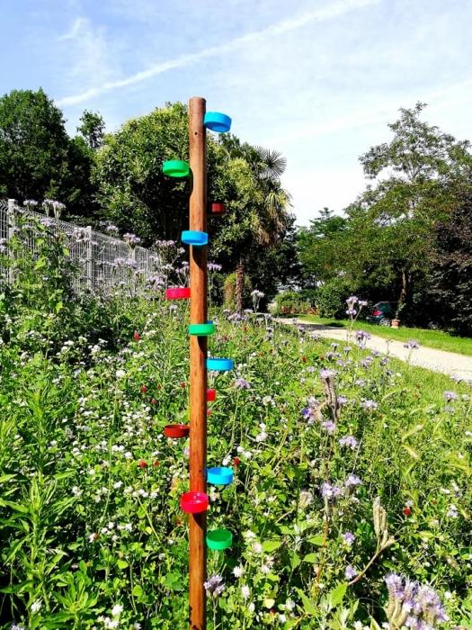 Favoriser les Insectes en été