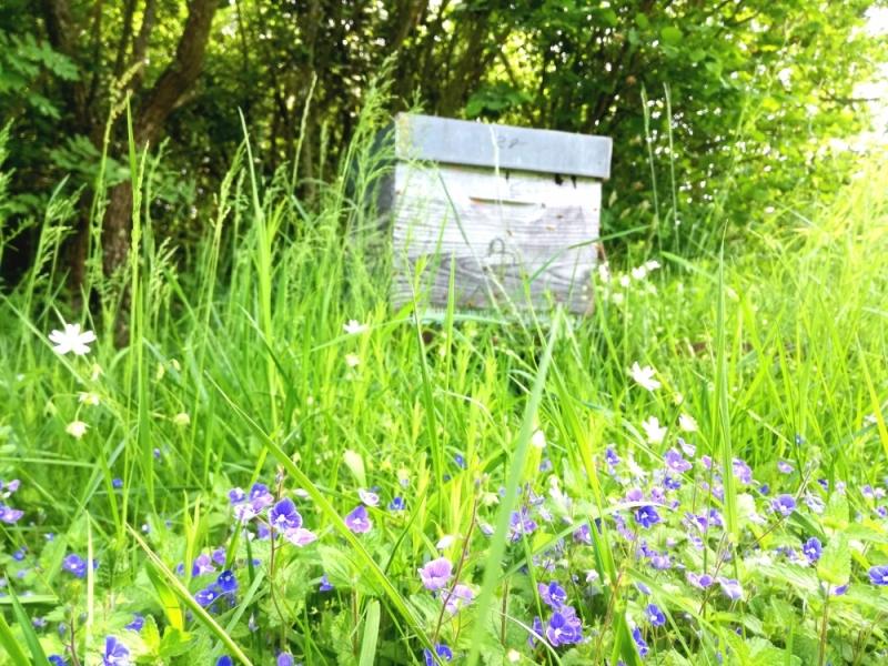 Une ruche dans son jardin